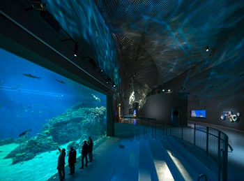 Meyer Sound D-Mitri Drives an Immersive Undersea Experience at Denmark's Blue Planet