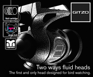 New Gitzo Two Ways Fluid Heads: The First & Only Heads Designed For Bird Watching